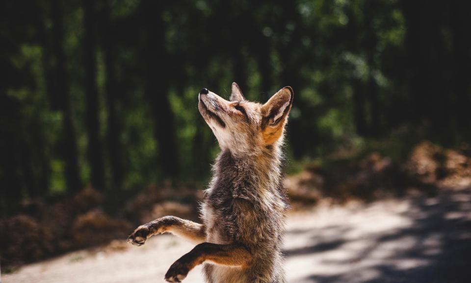 Wildlife photographer of the decade